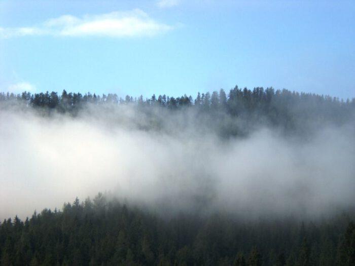 Nebel überm Wald