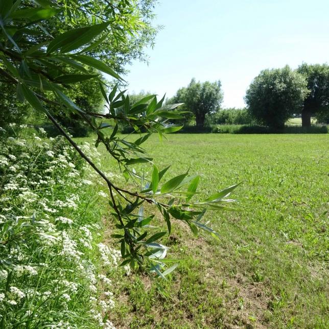 Weidenbüsche und Bäume