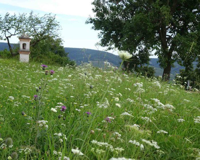 Sommerwiese mit Marterl
