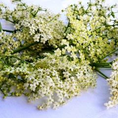 Holunderblüten sind nicht nur ein hervorragendes Hausmittel bei Erkältungen. Das blumige frische Aroma ist auch eine kulinarische Bereicherung.