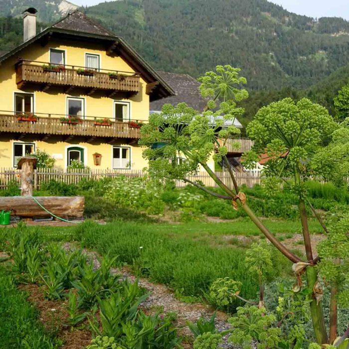 Klostergarten Gut Aich mit Angelika im Hildegardgarten