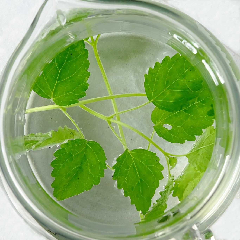 Die kleine zarte Melisse ist ein wahres pflanzliches Kraftwunder. Ihre tonisierende Wirkung ist unschlagbar.