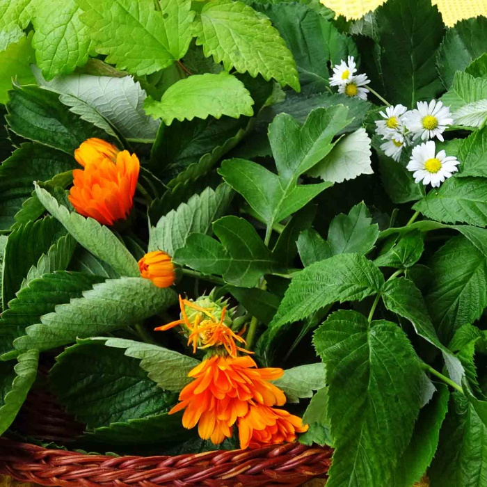 Brombeerblätter, Himbeerblätter, Erdbeerblätter, Melisse, Pfefferminze, Ringelblumen und Gänseblümchen sind die Ingridencien für einen aromatischen Haustee.