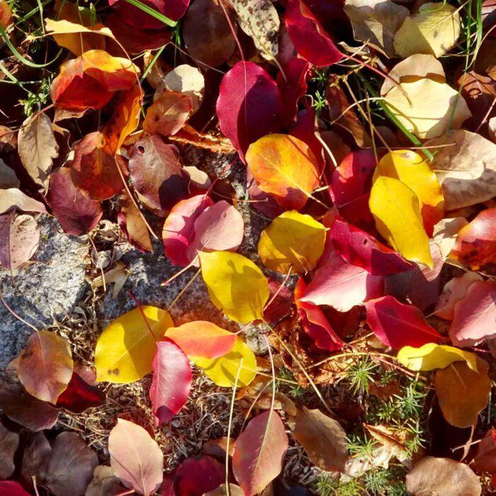 Hildegard von Bingen beschrieb in ihrer Physica mehr als 270 heilende Kräuter, Pflanzen und Bäume. Viele finden sich in diesem Garten.