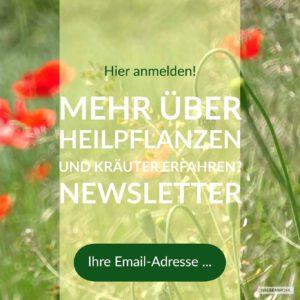 Site-Banner für die Newsletter-Anmeldung auf der Homepage
