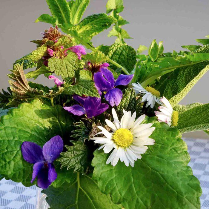 Sieben Kräuter gegen Frühjahrsmüdigkeit: Taubnessel, Gänseblümchen, Veilchen, Brennnessel, Pfefferminze, Melisse, Salbei.