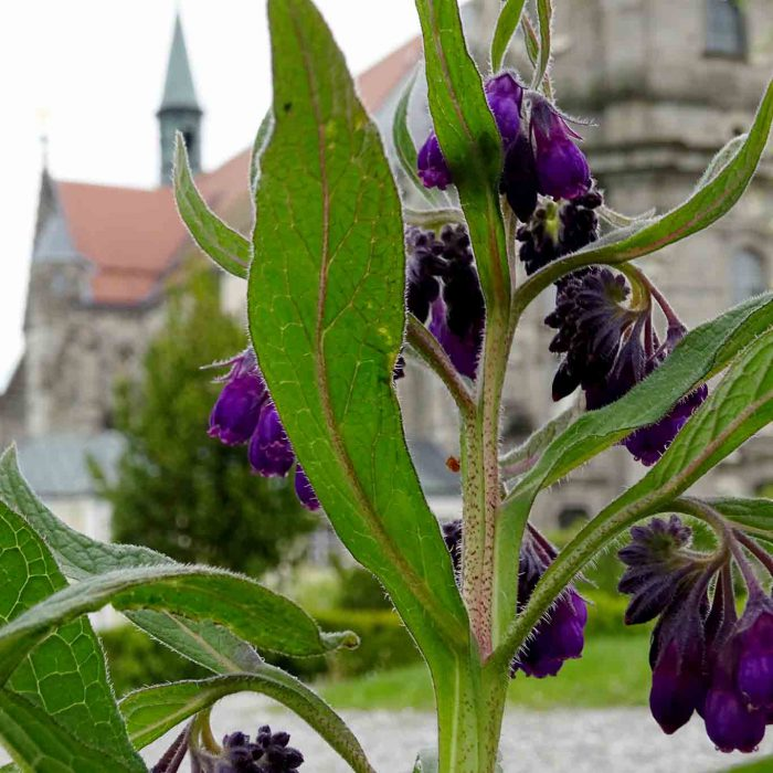 Beinwell mit der Stiftskirche Zwettl.