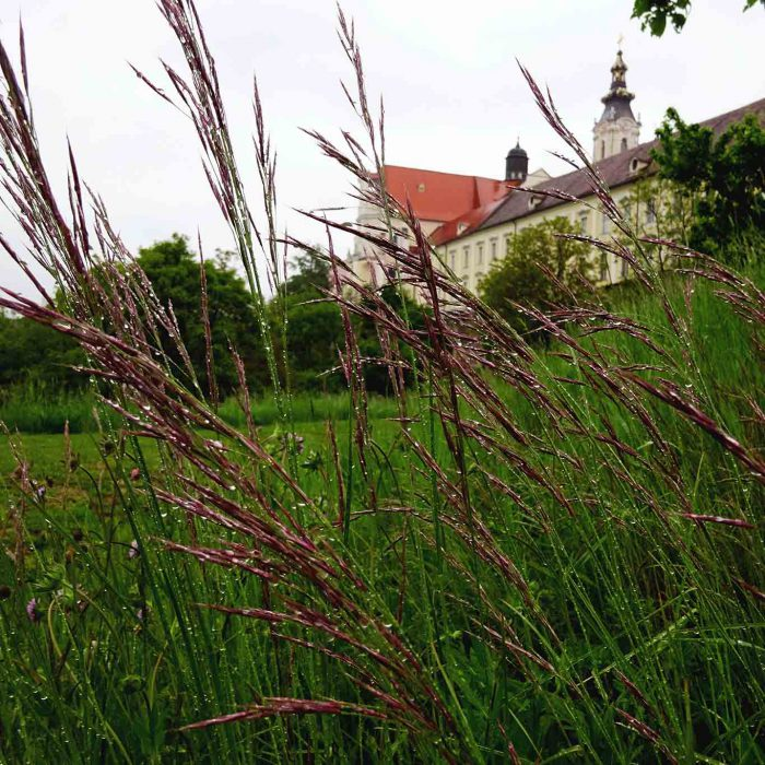 Ein Blick aus dem Garten der Stille auf das Stift Altenburg.