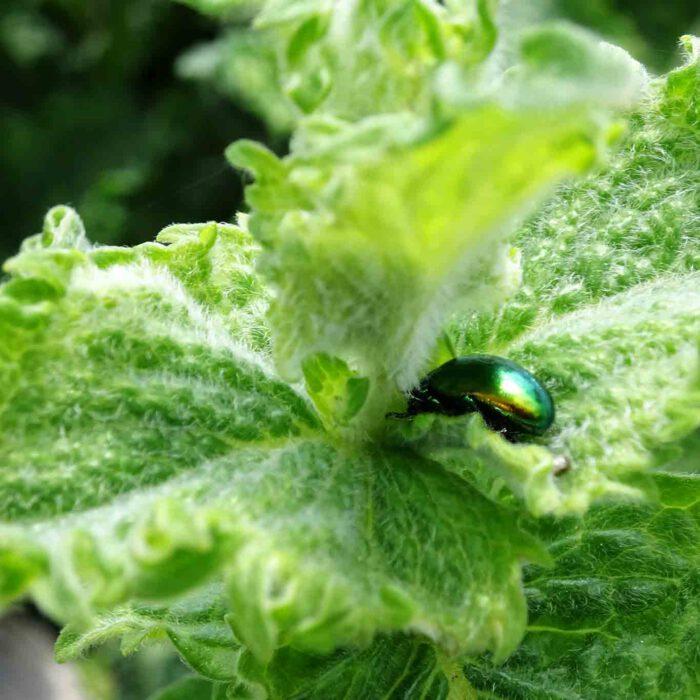 Jedem Tierchen sein Pläsierchen. Jedem Käfer sein Blatt!