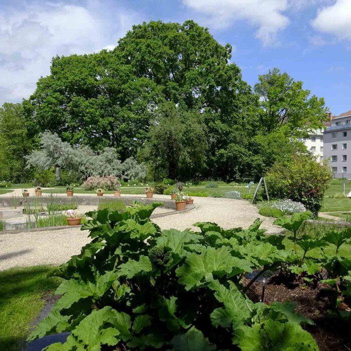 Der botanische Garten in Wien ist auch ein Bürgerpark.