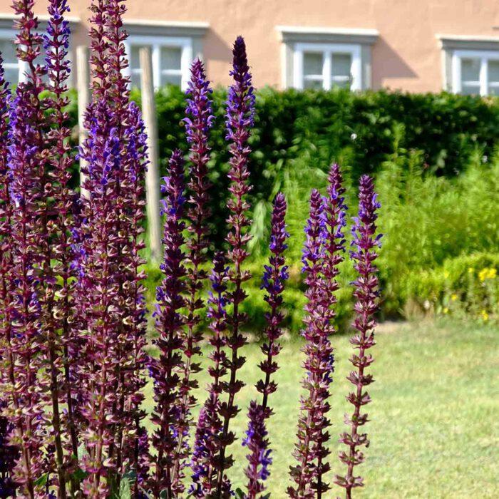 Klostergärten sind ein Abbild der Schöpfung. Vielfalt, Kontraste, Harmonie.