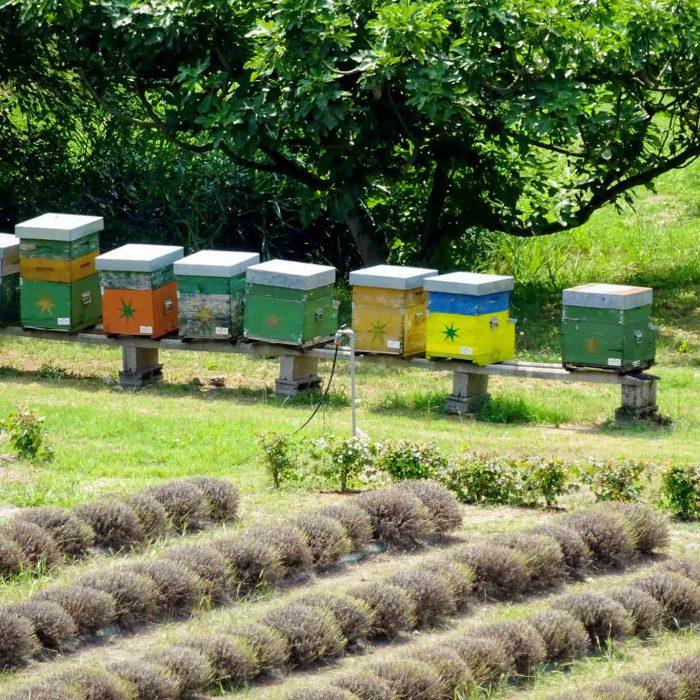 Bienenvolker sind in den Klostergärten zu Hause.