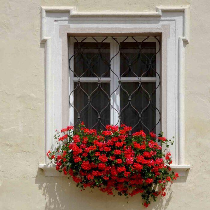 Wahre Schönheit kommt von innen und hängt manchmal als Blumenkasten vor dem Fenster.