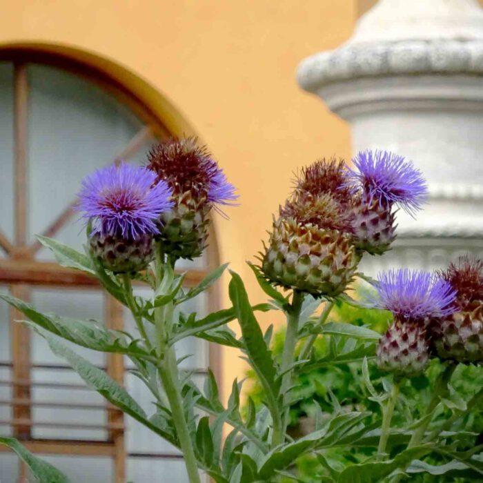 Die Farbgebung und das Licht des italienischen Himmels zaubern immer wieder neue Eindrücke.