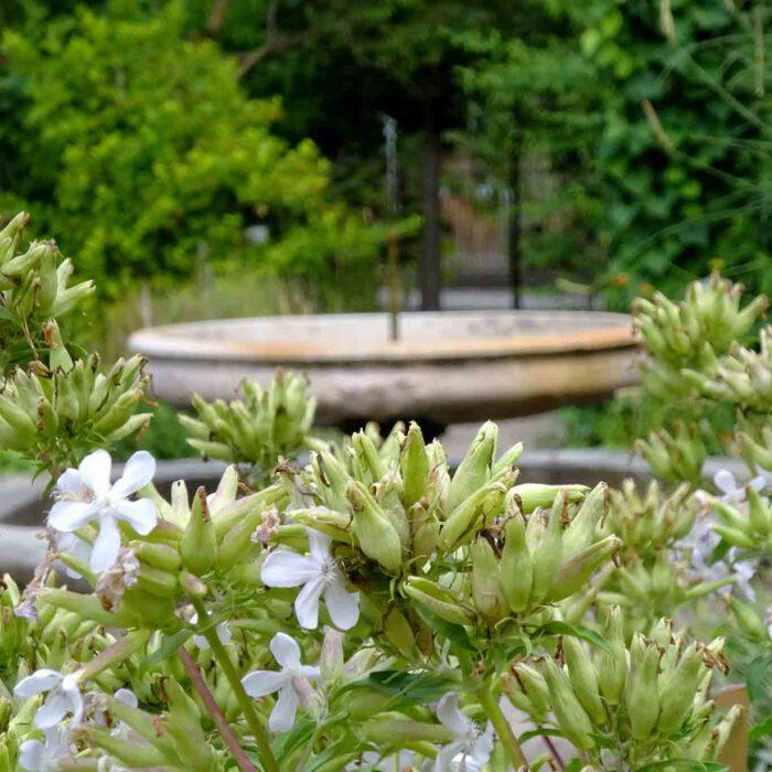 Innerhalb der Ummauerung ist der alte botanische Garten in vier Quarrees unterteilt, in deren Mitte eine Fonaine plätschert.