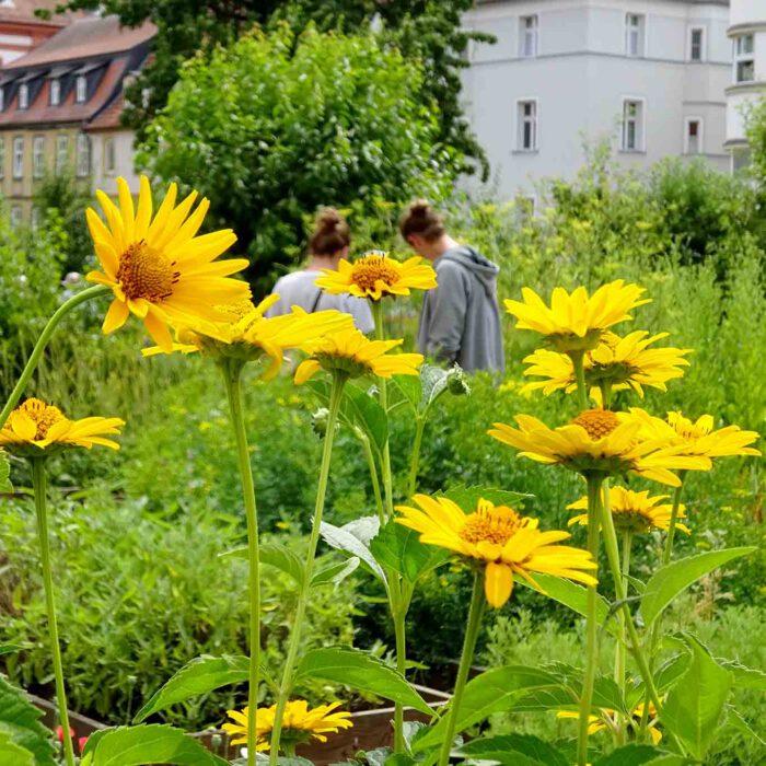 Ein Gang durch den Klostergarten ist auch eine Entdeckungsreise.