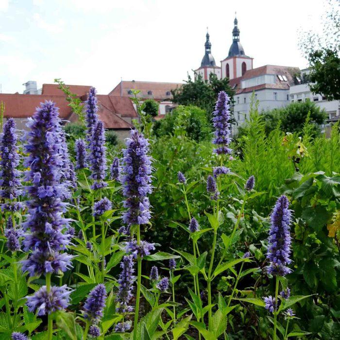 Der Fuldaer Klostergarten ist eine Oase mitten in der Stadt.