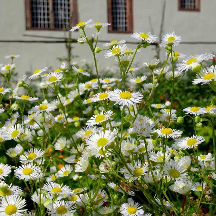 Blüten sind des Gärtners Lohn.