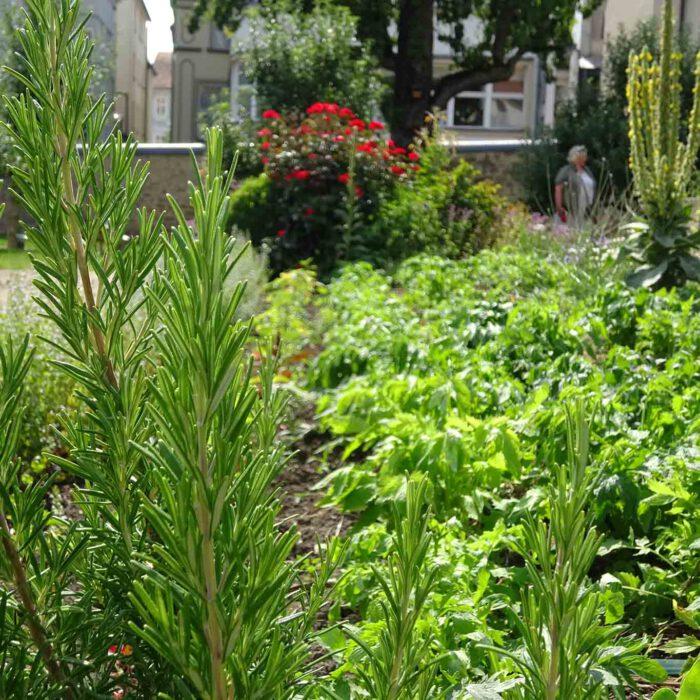 Die Ordnung der Pflanzen im Fuldaer Klostergarten bestimmt sich nach der Verträglichkeit untereinander.