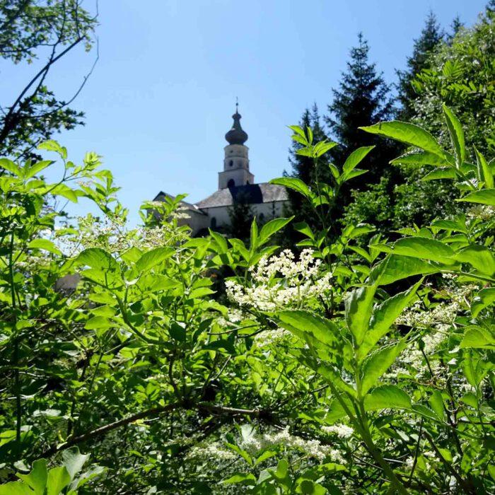 Das Kloster Marienberg ist eingebettet in die artenreiche Natur der vinschgauer Berge.