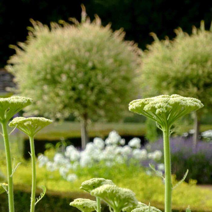 Formenvielfalt zeichnet einen schönen Garten aus.