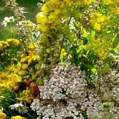 Maria Himmelfahrt ist traditionell das Fest der Kräutersegnungen. Sieben Heilkräuter sollen dazu in einem Sträusschen vereint sein.