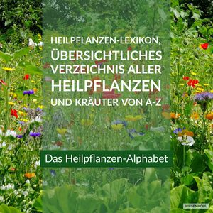 Heilpflanzen-Alphabet Banner Wiesenwohl oct19: Alle Heilpflanzen und Heilkräuter für Kräutertees und Anwendungen von A-Z, ABC-Wiesenewohl