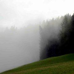 Nebel am Wald in der Nähe von Stams.