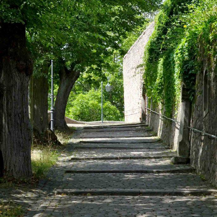 Der gepflasterte Weg im Lindenschatten zum Franziskanerkloster auf dem Frauenberg.