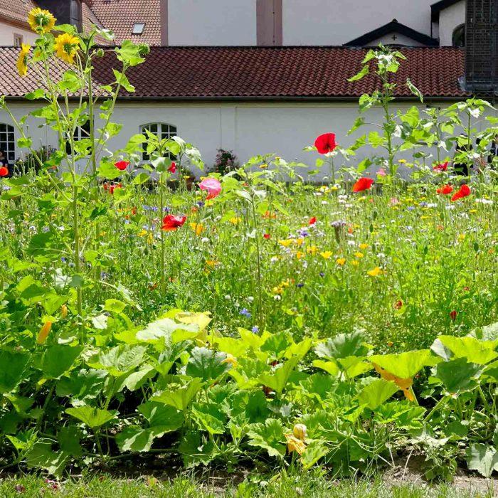 Bunte Beete im Klostergarten Frauenberg