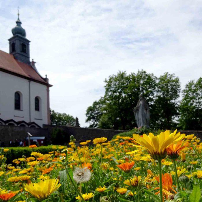 Ringelblumen im Klostergarten Frauenberg