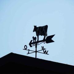 Eine Wetterfahne mit Kuhmotiv im schleswig-holsteinischen Land.