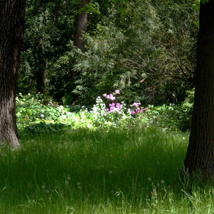 Lichtung im Heidegarten