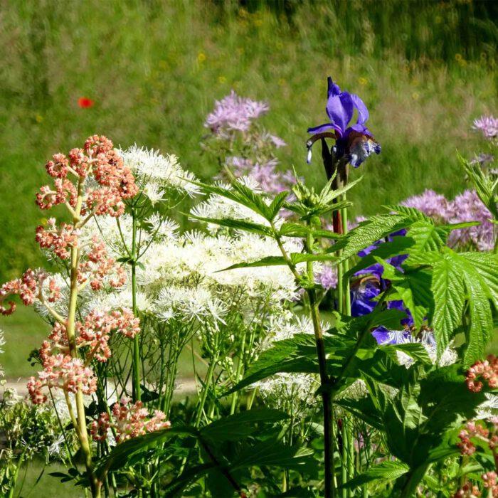 Liebevolle Blütenarrangements in den Blumenrabatten
