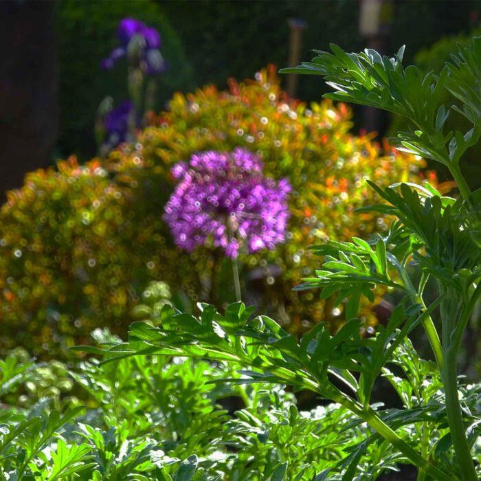 Die Wermutblätter bilden einen königlichen Rahmen in der kaiserlichen Pracht der Farben.