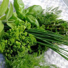 Frisch aus dem Garten kommen im Juni: Schnittlauch, Petersilie, Dill, Bohnenkraut, Basilikum und Salbei.