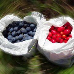 Die Kräuterernte ist im Monat Oktober nicht sehr ergiebig. Daher lohnt es sich die gesunden Früchte für den Wintervorrat ins Haus zu holen.