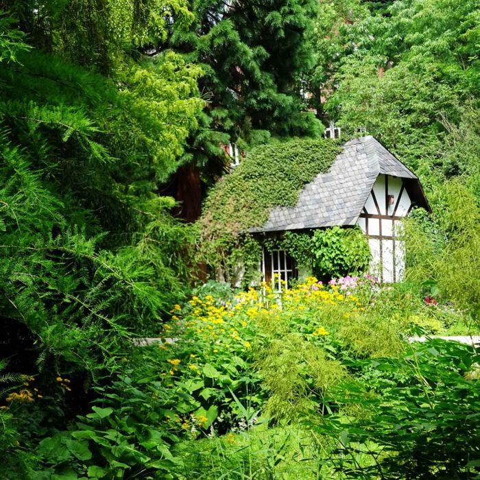 Der alte Botanische Garten in Kiel ist zum Wald geworden voller bestaunenswerter Hölzer.