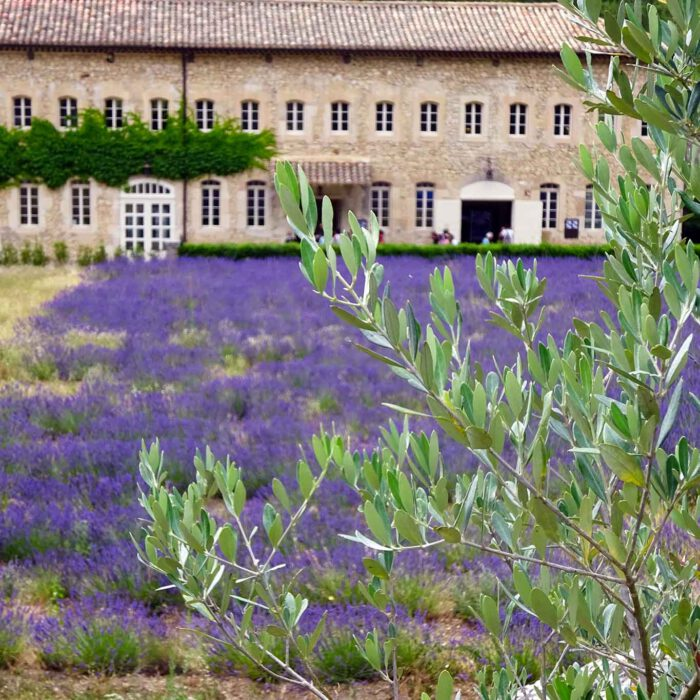 Mediterrane Komposition: Lavendel an Olivenzweigen.