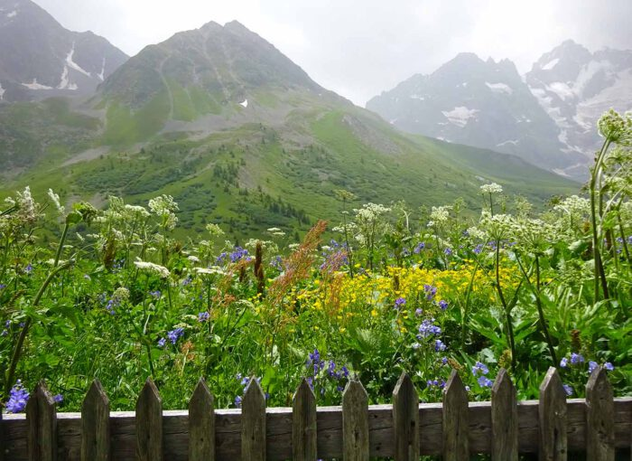 In einer malerischen Bergkulisse ist der Jardin botanique du Lautaret eingebettet.